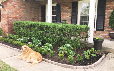 Create Curb Appeal with Hydrangea Garden Bed