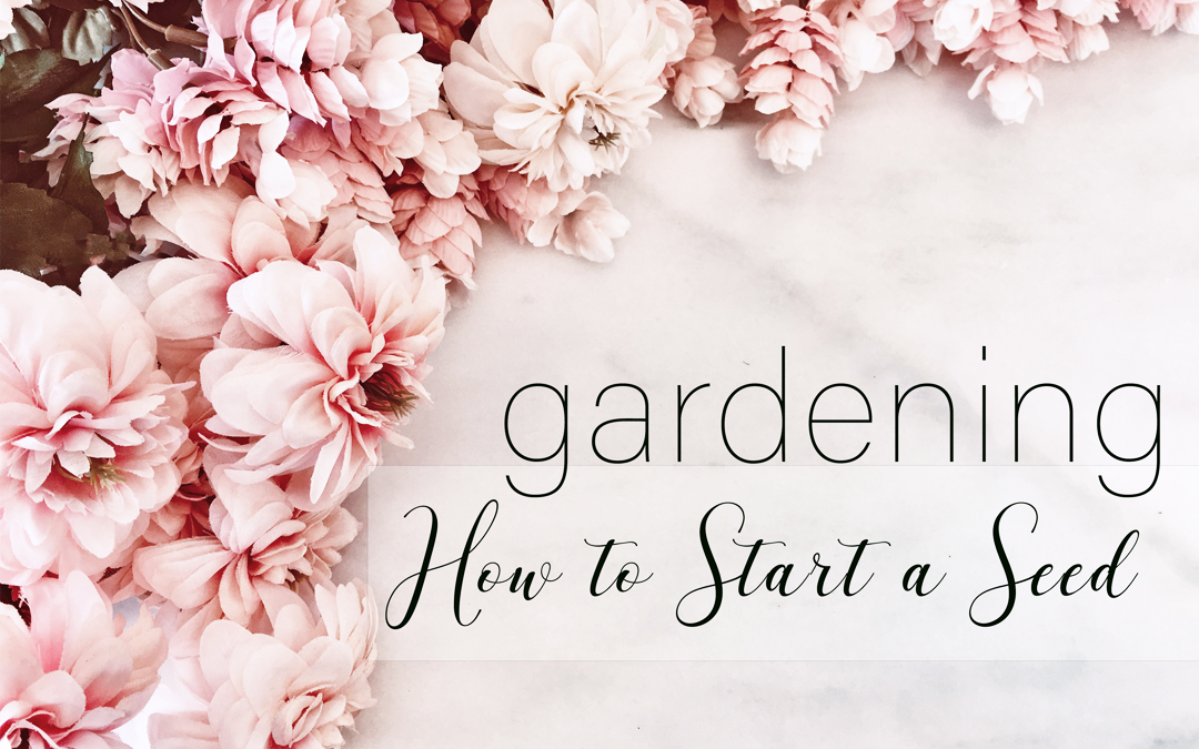 How to Start a Seed Tutorial Boroughfare Home