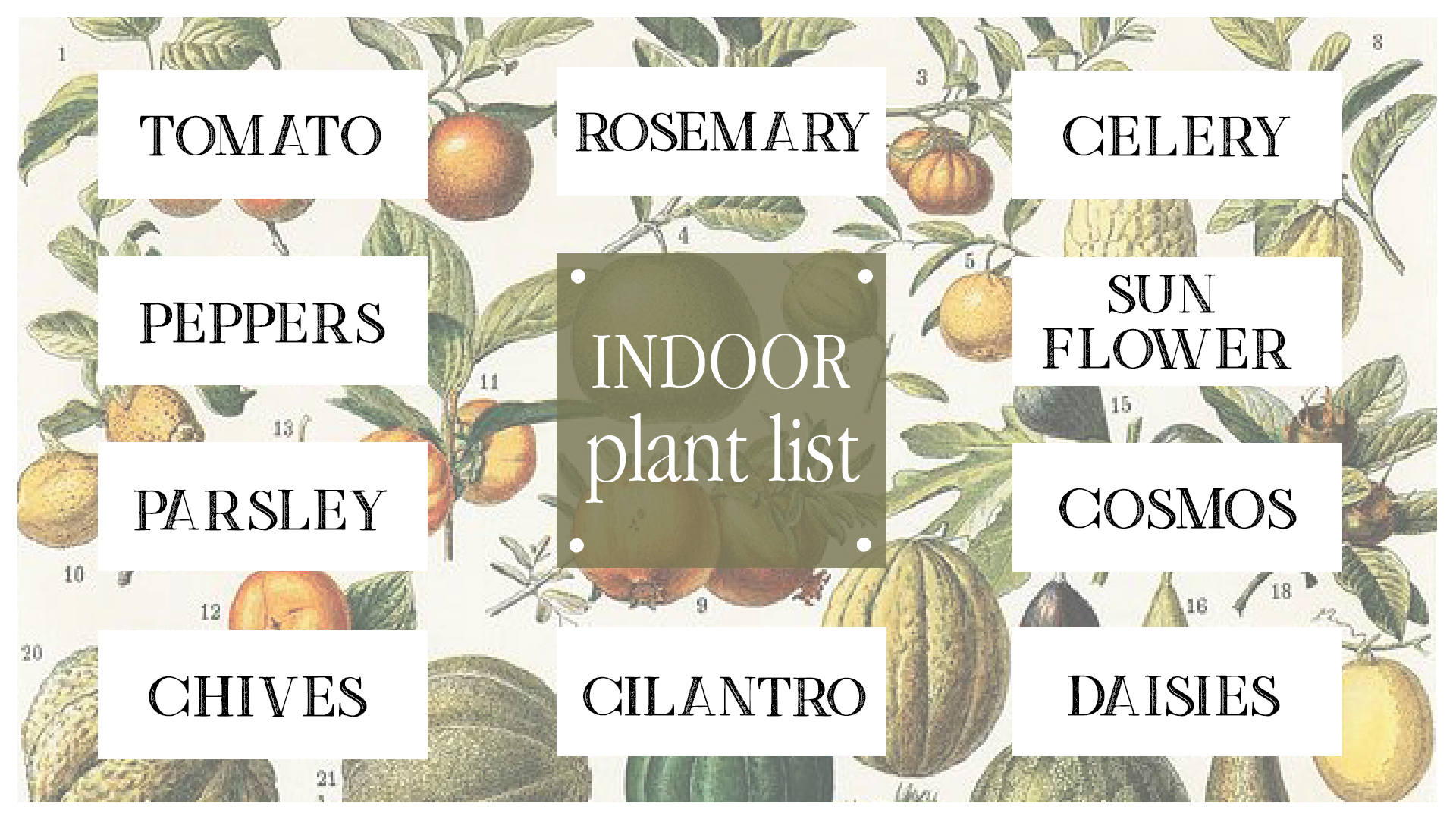 Boroughfare Home Garden Post Indoor Plant List for Seeds